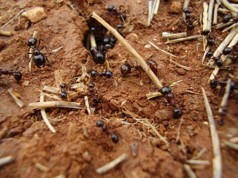 ekologija - mravi