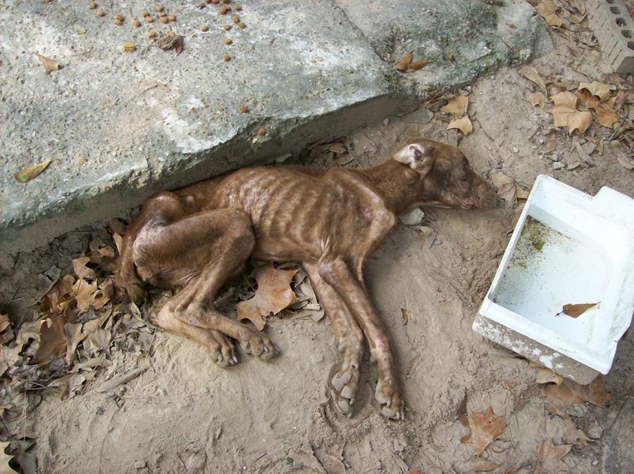 zlostavljanje životinja