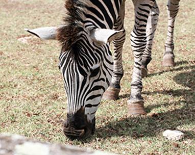 National Park Brijuni Excursions